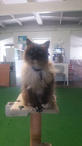 Palmerston North Cattery